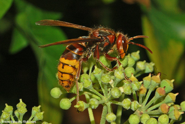 Guide To Identifying Wasps And Other Stinging Insects
