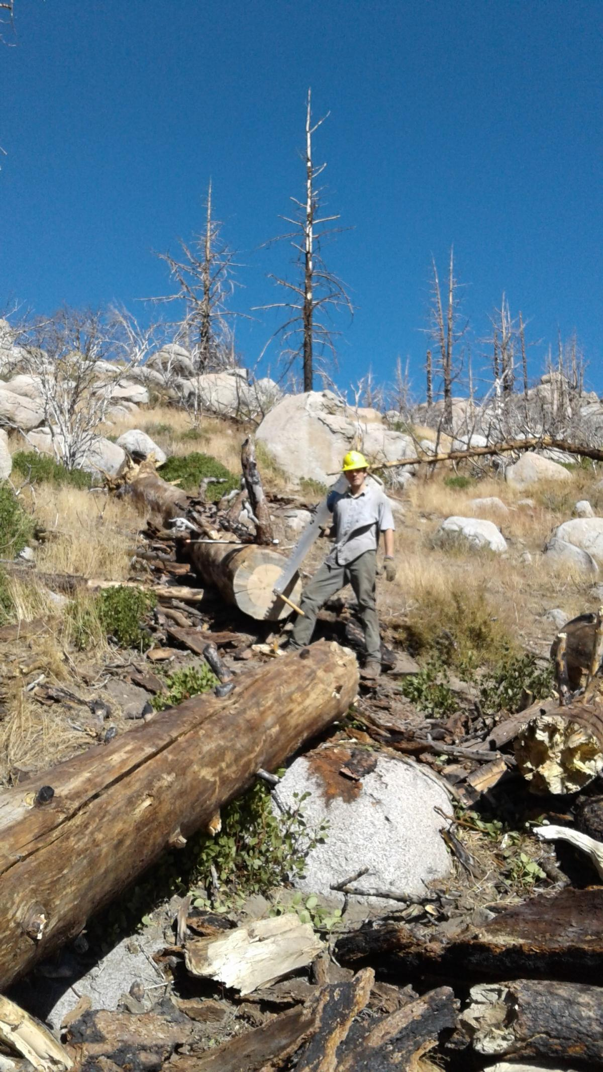 Former conservation volunteer and SCA Leader Crew member Caleb Sanders uses a crosscut saw to remove blowdowns from a wilderness section of Sequoia National Forest.