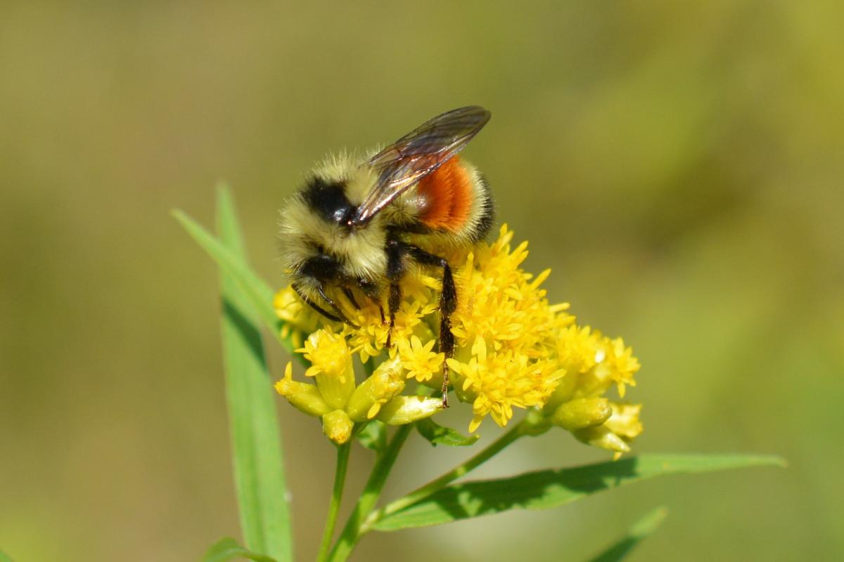 everything you ever wanted to know about bees the student
