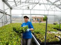 An SCA Intern work in plant management at a greenhouse