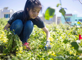 SCA Earth Day Volunteer Pulling Invasive Species in California