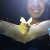 SCA intern Ashley Xu holding a pallid bat at Glen Canyon Recreation Area.