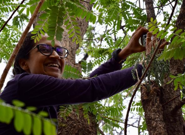 Pooja was reminded of her childhood as she placed a recorder high in a tree on the outskirts of Kanha NP