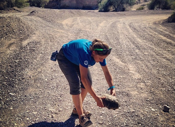One desert, One Tortoise, ONE CHANCE.