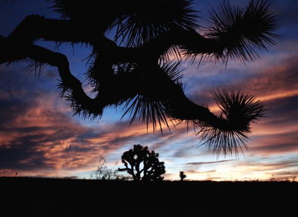 Sunset in the Rands Wilderness (Photo by Matt Richter)