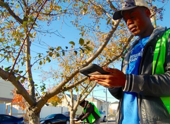 SCA members survey NYC street trees