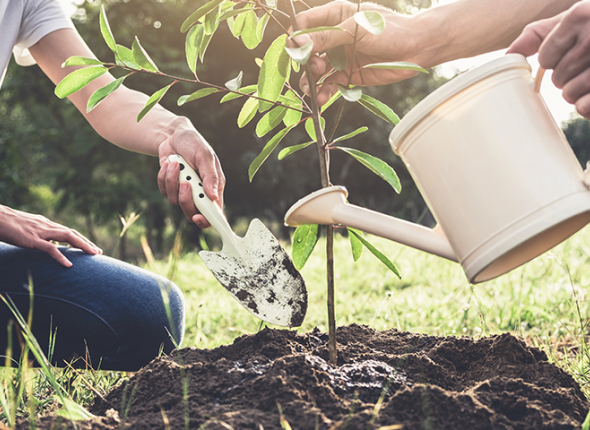 Two People Work Together to Plant a Tree in the Garden