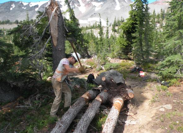 Sterling battling the three-pronged tree