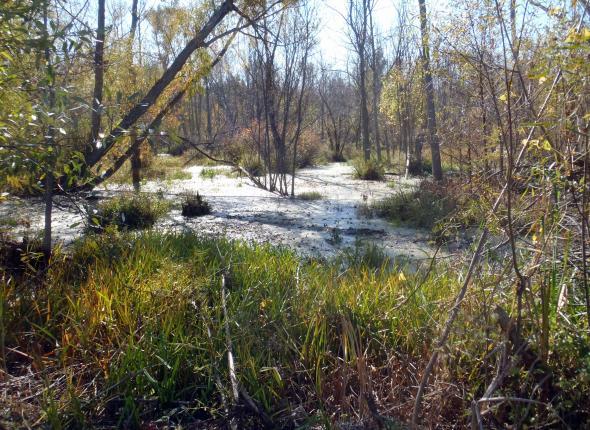 The Great Marsh