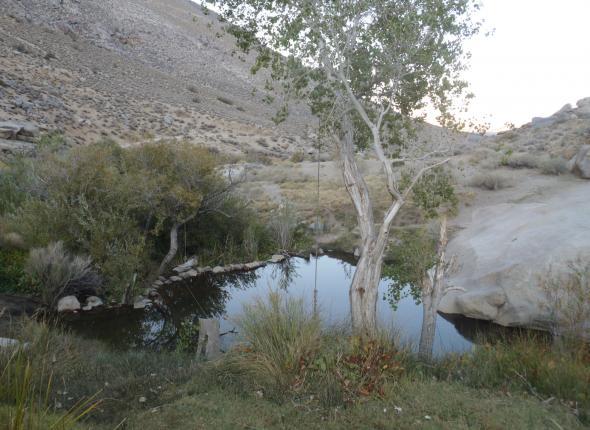 Peaceful swimming hole.