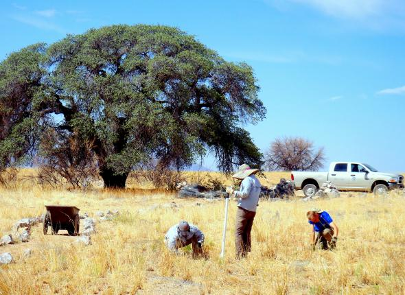 Pulling invasives at the border