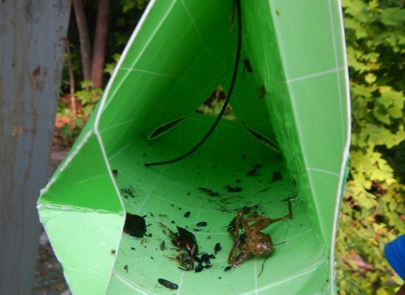 Inside a moth trap
