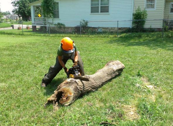 Leah using her renewed chainsaw certificate!
