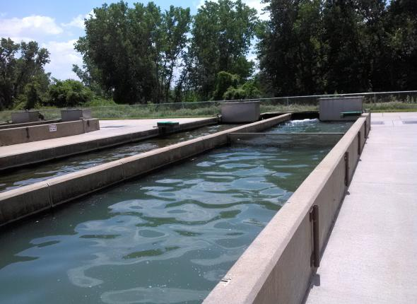 Fish Hatchery at a site
