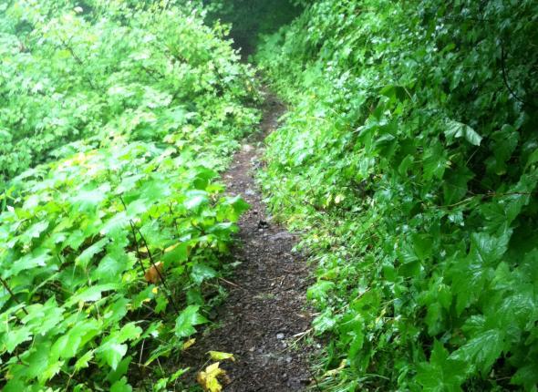 Brushy brushy trail