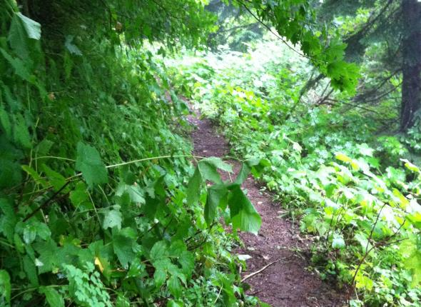 More brushy trail