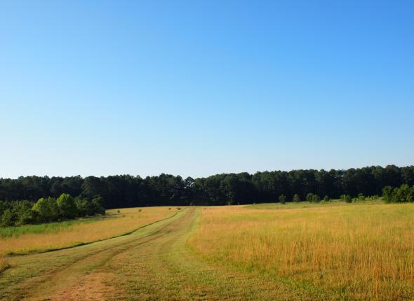 The field where we searched for canebrake