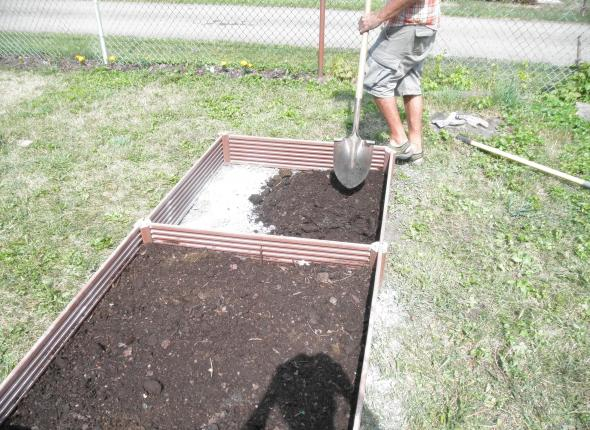 covering the lime with dirt