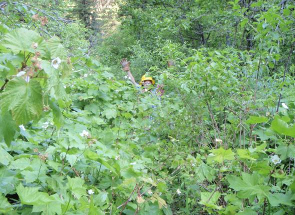 Gnar jungle before