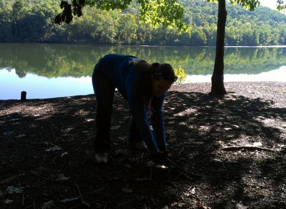Removing some invasive species