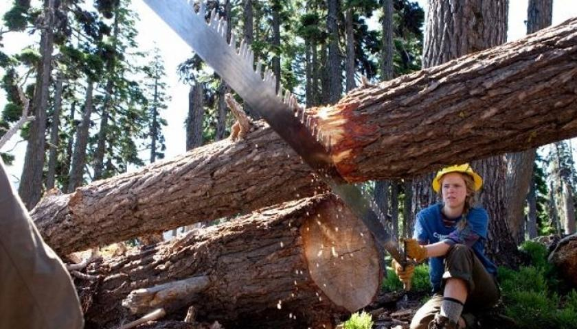 Crosscut Saw Sharpening Course | The Student Conservation