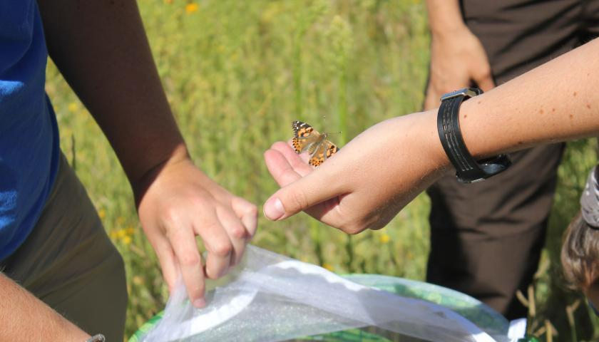 The Importance of Butterfly Gardening | The Student