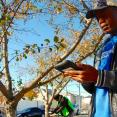 SCA members survey NYC street trees