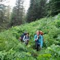 Bush whacking on White Pine Trail