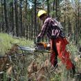 Corps member about to cut downed tree to clear Forest Service road